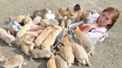 Girl Gets Eaten by Hungry Bunnies! The Rabbit Island Challenge!